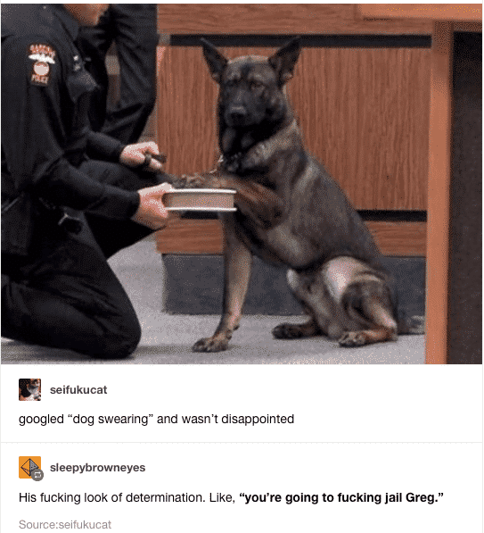funny picture dog swearing youre going to jail greg