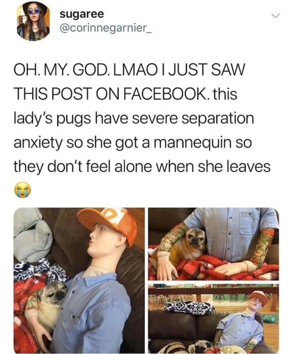 Funniest pictures ever, funniest pictures, best funny pictures, what's the funniest picture ever, funny pics, funny picture ideas, r/funny pictures
