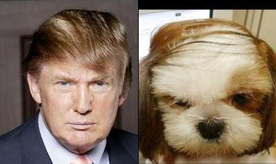donald trump dog