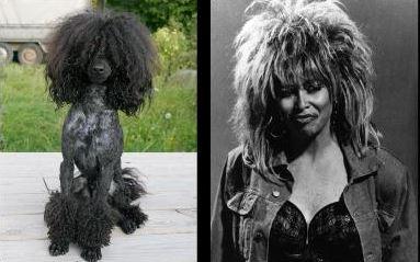 celebrity dog look alikes