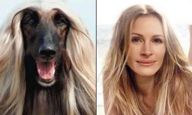 dog celeb look alikes