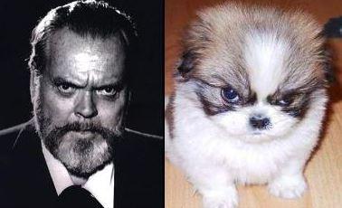 celebrity dog pictures