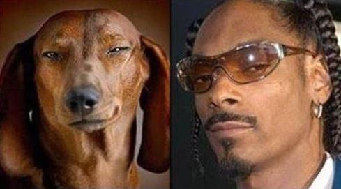 Image result for celebrity dog look alike