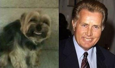 dog totally looks like