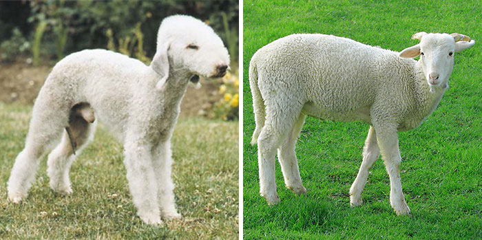 dog celebrity