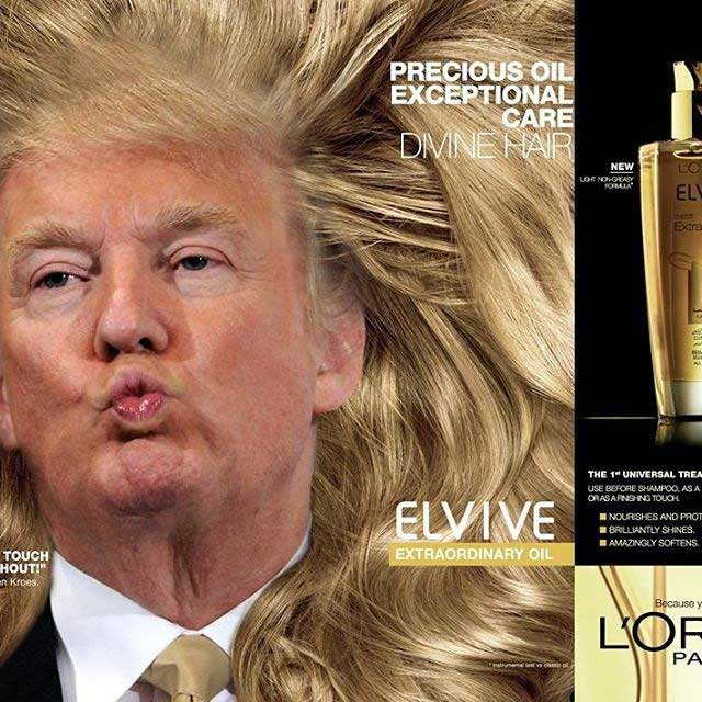 donald trump hair meme trump meme gallery 50 best from the election and beyond