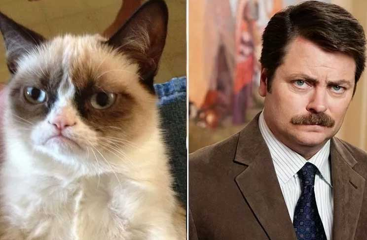 Celebrities And Their Cat Look Alikes Gallery