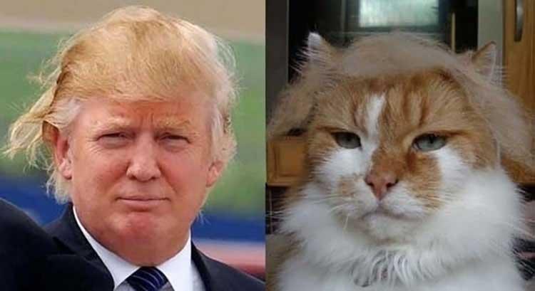 Cats That Look Like Celebrities | www.pixshark.com ...