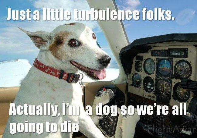 Important Plane-dog-meme-1