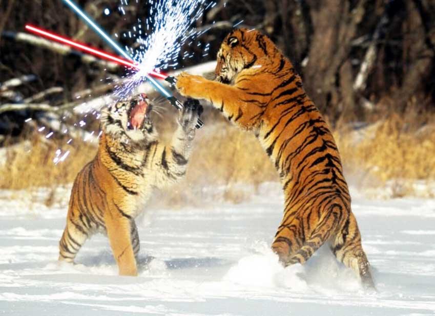 Animals With Lightsabers Gallery Worldwideinterweb