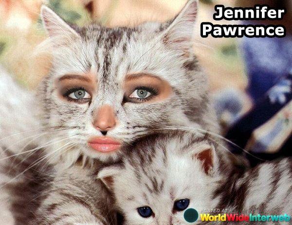 jennifer lawrence cat