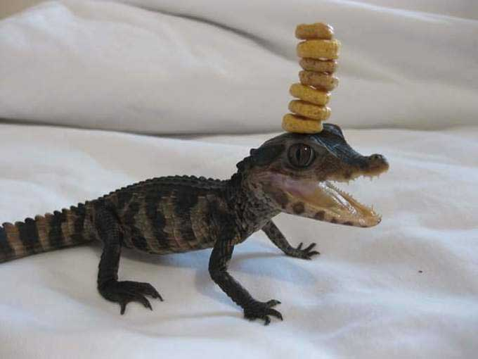 Animals With Food On Their Head (GALLERY)