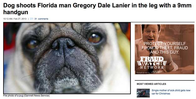 florida-dog-headline