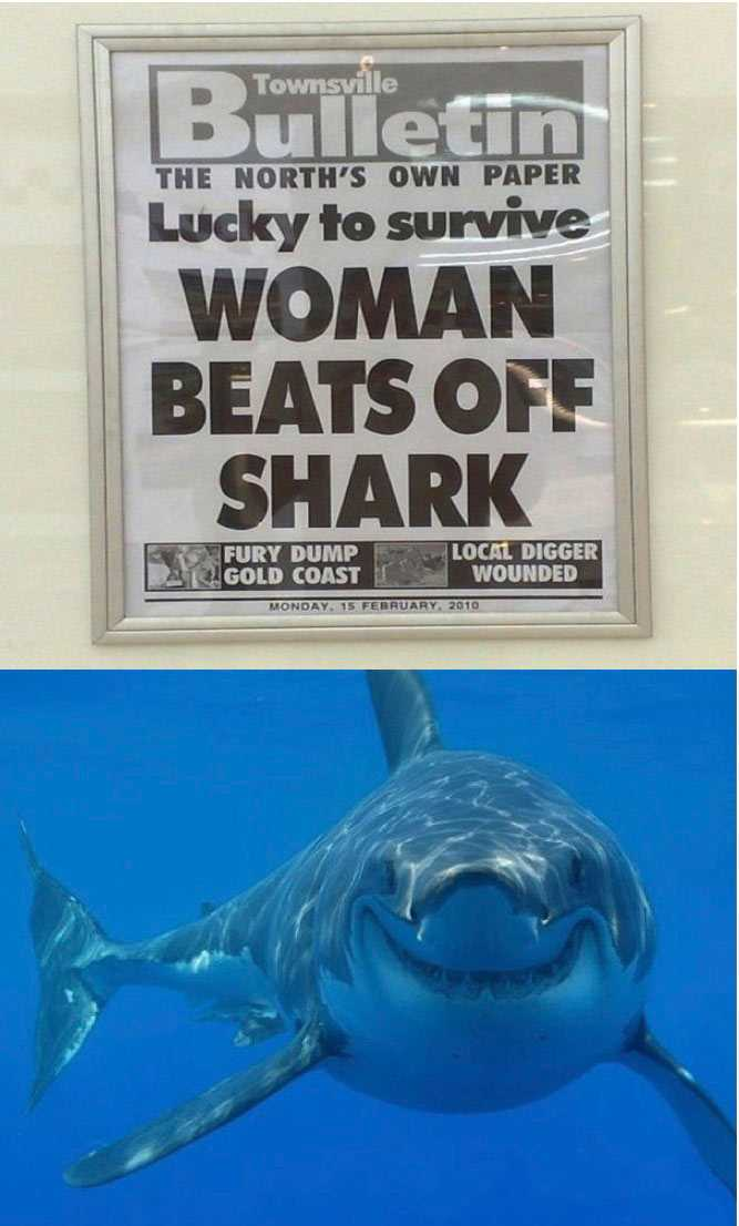 The 21 Funniest Shark Memes Ever (GALLERY)