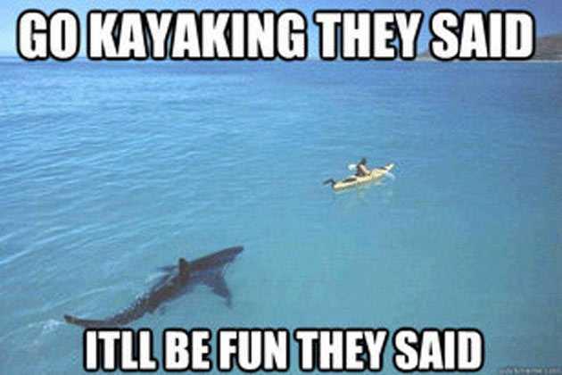 The 21 Funniest Shark Memes Ever (GALLERY)