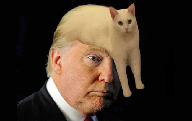 Best Weird Cat Products