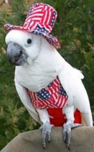 super patriotic pets 20 photos