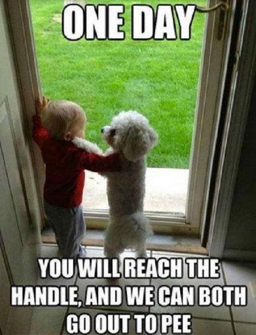 baby-dog-meme