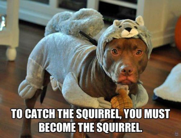 become-the-squirrel