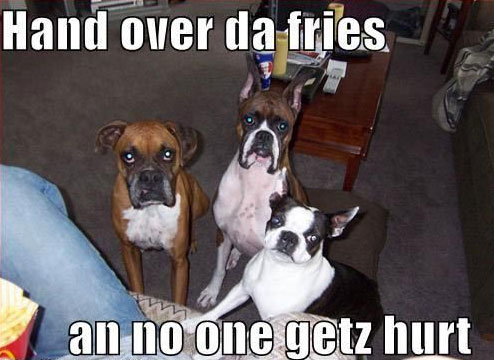 Funny Boxer Dog Meme : Funny dog memes i top 50 of all time i world wide interweb