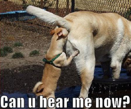best-dog-memes-ever
