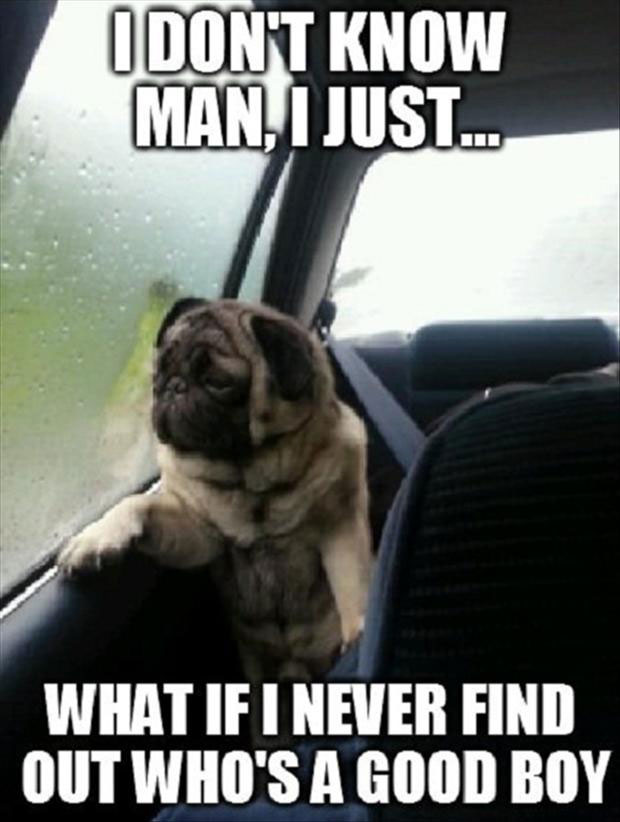depressed-dog-memes