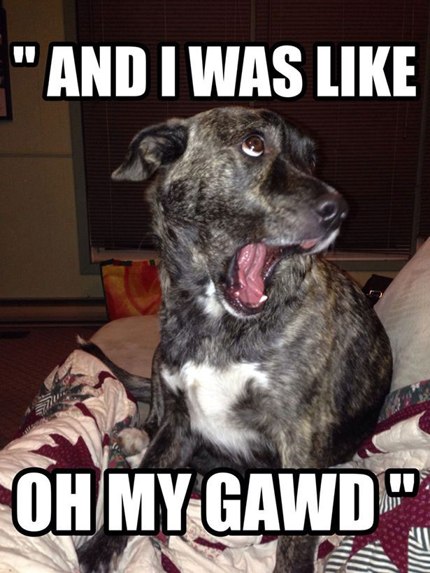 dog-OMG