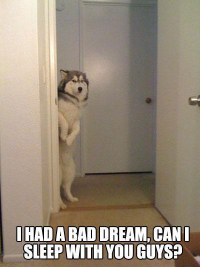dog-dream-meme