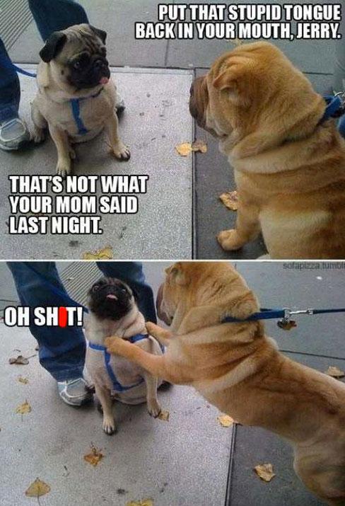 dog-fight-meme