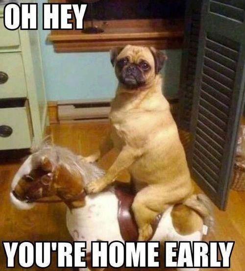 dog-home-early