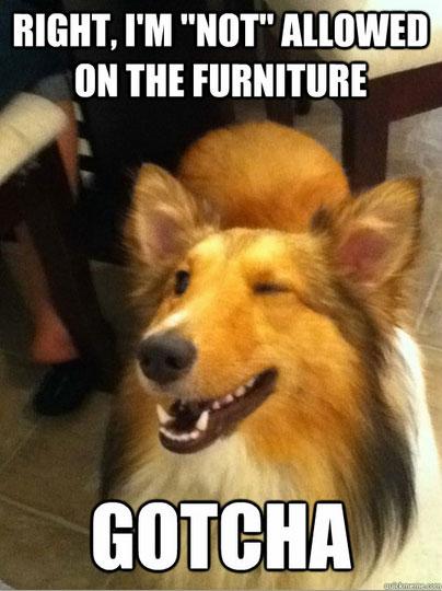 dog-mem-wink