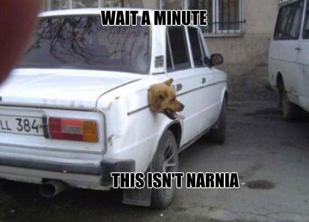 dog-meme-funny