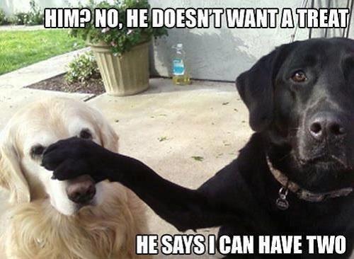 dog-meme-treat