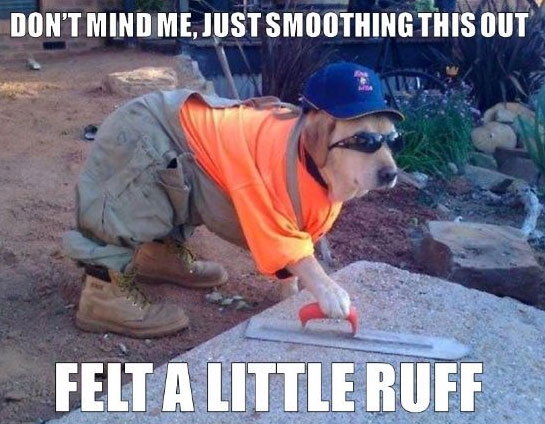dog-memes-best