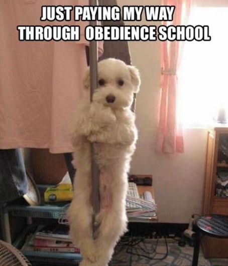 dog-pole-dancer