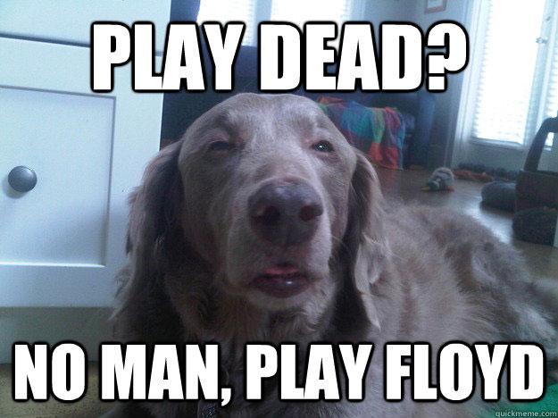 dog-stoned-meme