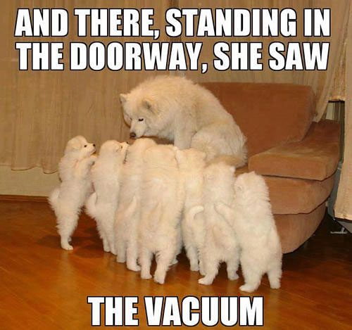dog-storyteller
