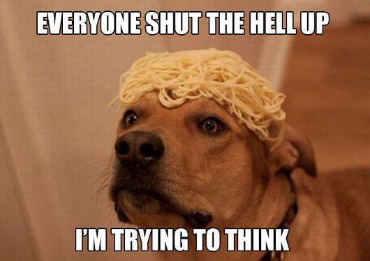 dog-think-meme