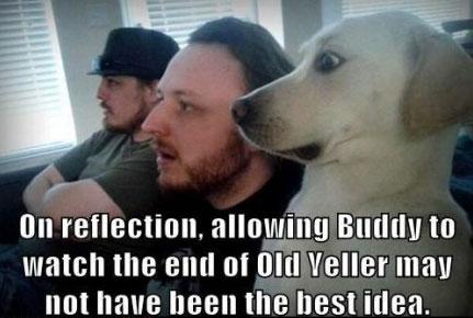 funniest-dog-meme