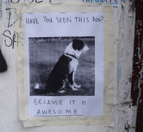 lost pets websites