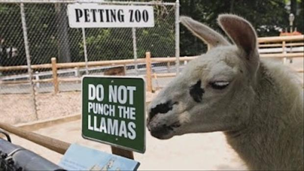 Funny Zoo Memes : The 27 funniest zoo signs ever gallery worldwideinterweb