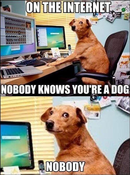 internet-dog-memes