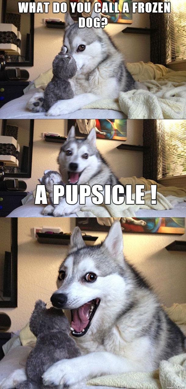 pun-dog-meme