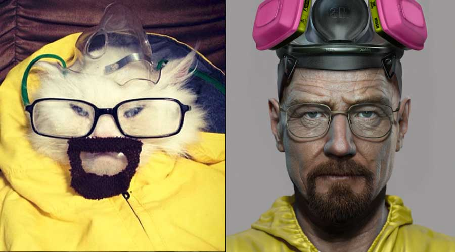 Cats Who Totally Look Like Famous Tv Characters