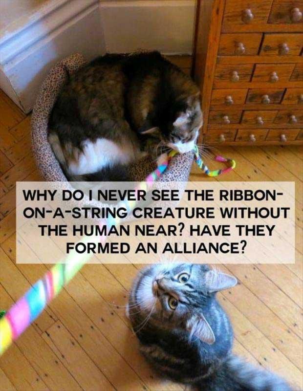 cat-string-memes