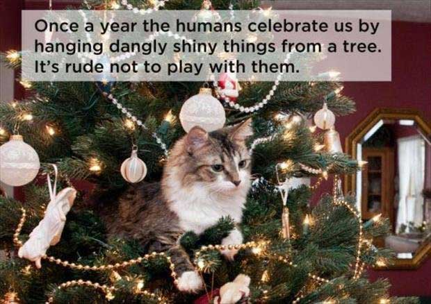 cat-thoughts-christmas