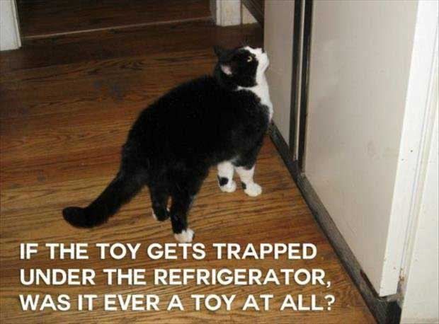 funny-cat-thoughyts