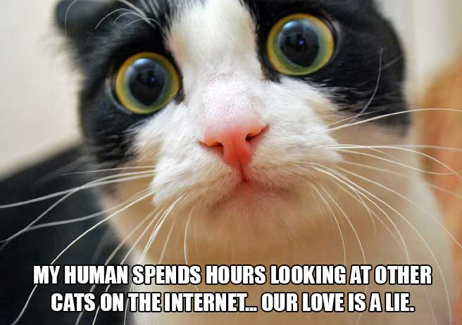 cat-thoughts-internet