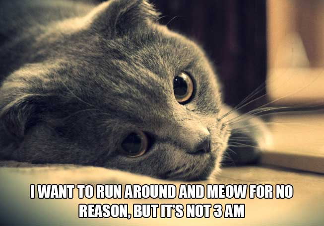 cat-thoughts-picture