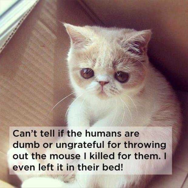 cat-thoughts-about-humans
